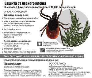 mite-tips